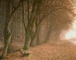 Поздняя осень